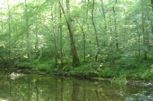 A stream on the Natchez Trace